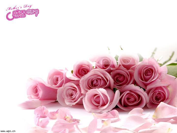 粉玫瑰ppt模板模板免费下载