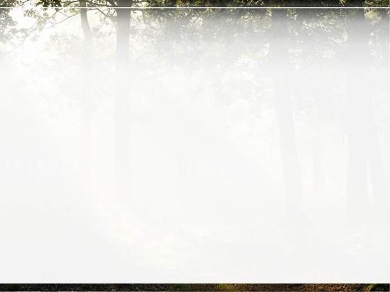 树林边框简笔画