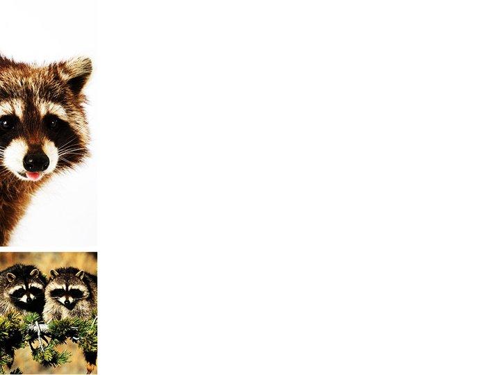 野生动物ppt模板模板免费下载