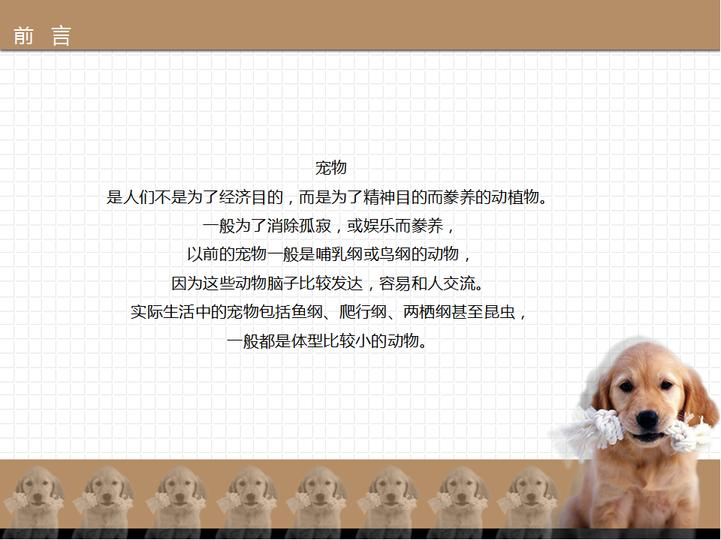 宠物用品类ppt模板模板免费下载_193962- wps在线模板
