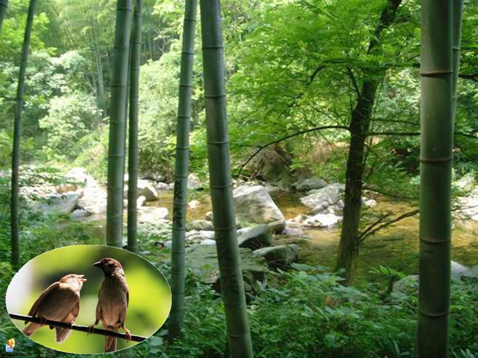 大森林的早晨儿童画属于水粉画,作品长306px,宽450px,作者薜瞳,女,4
