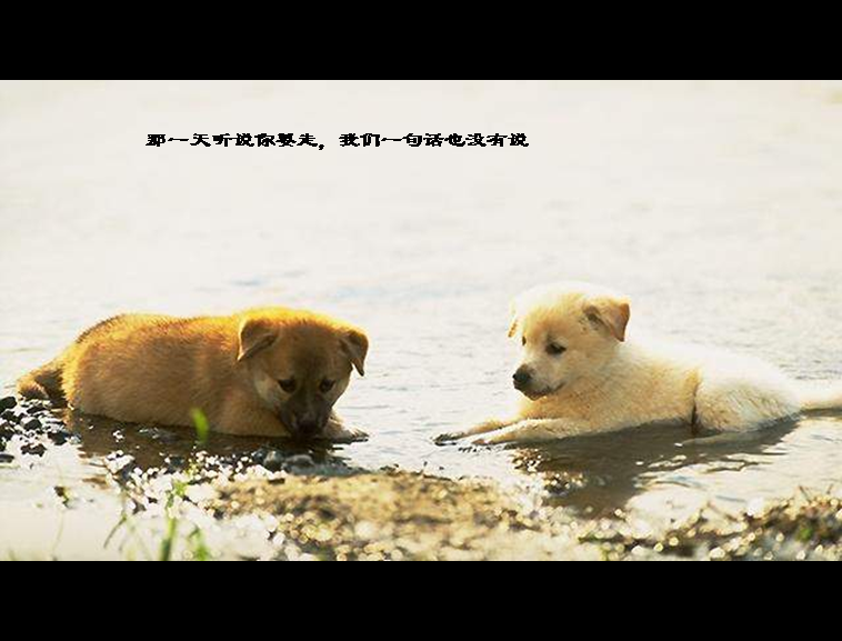 宠物狗ppt模板模板免费下载_43862- wps在线模板