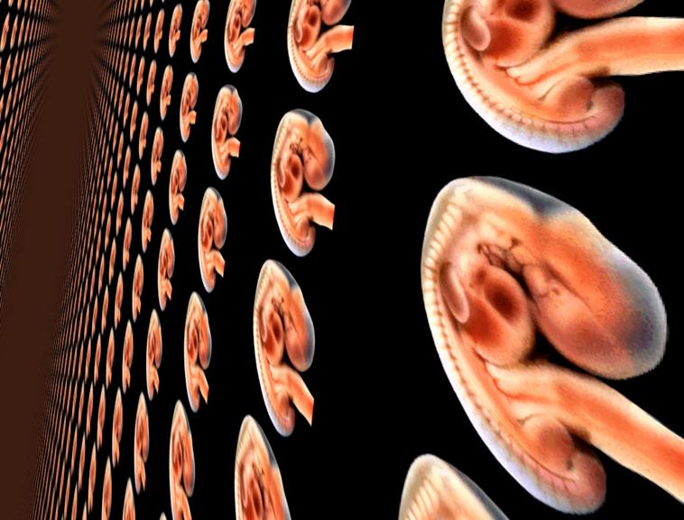 胚胎ppt