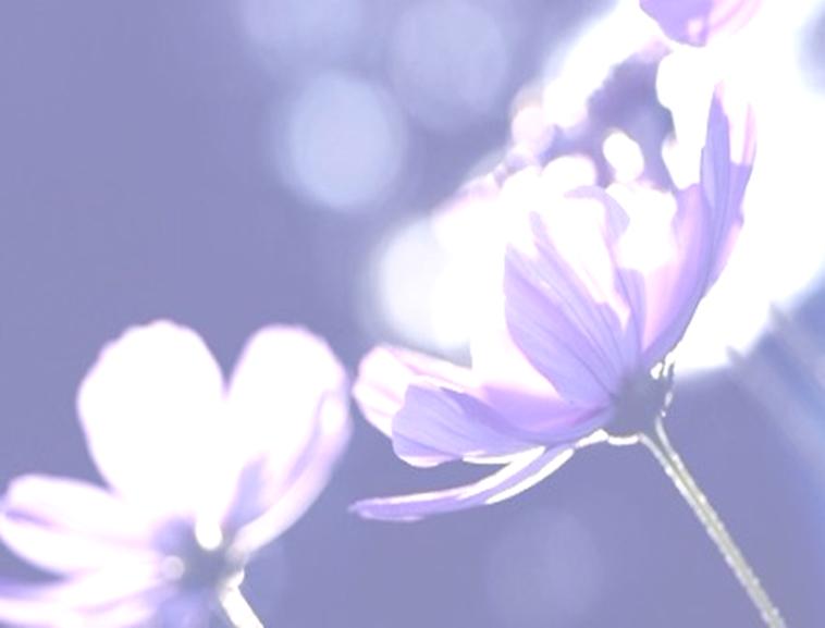 【ppt模板】小清新花朵模板免费下载