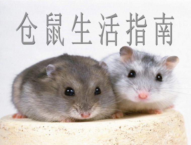仓鼠指南模板免费下载