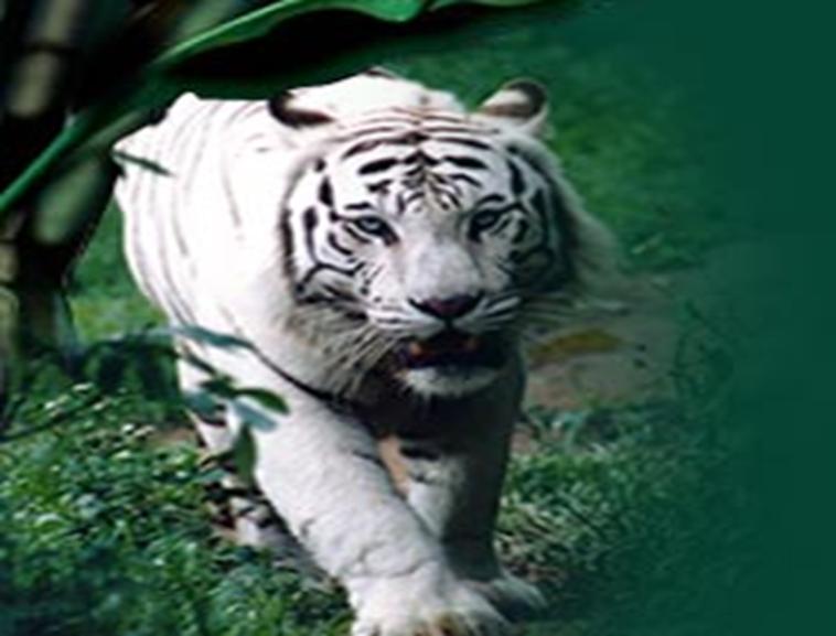 动物的运动模板免费下载