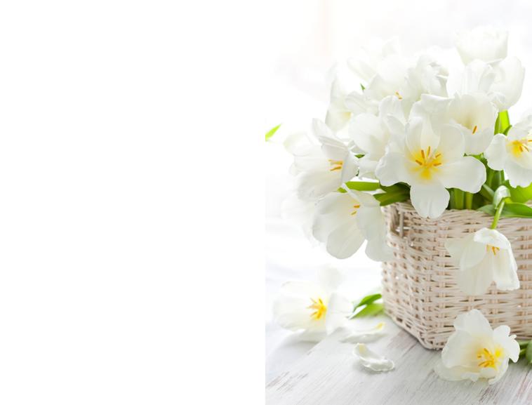 白色小花背景ppt模板模板免费下载