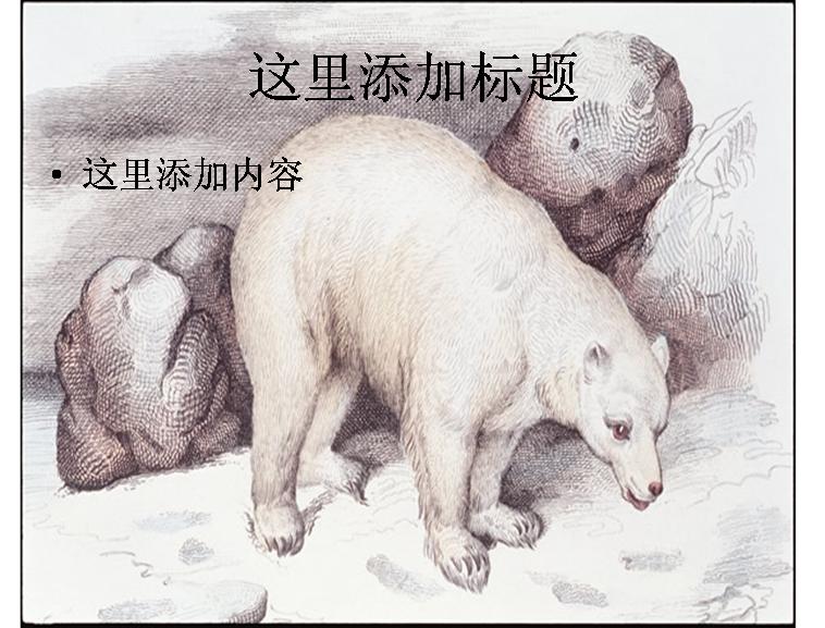手绘北极熊图片