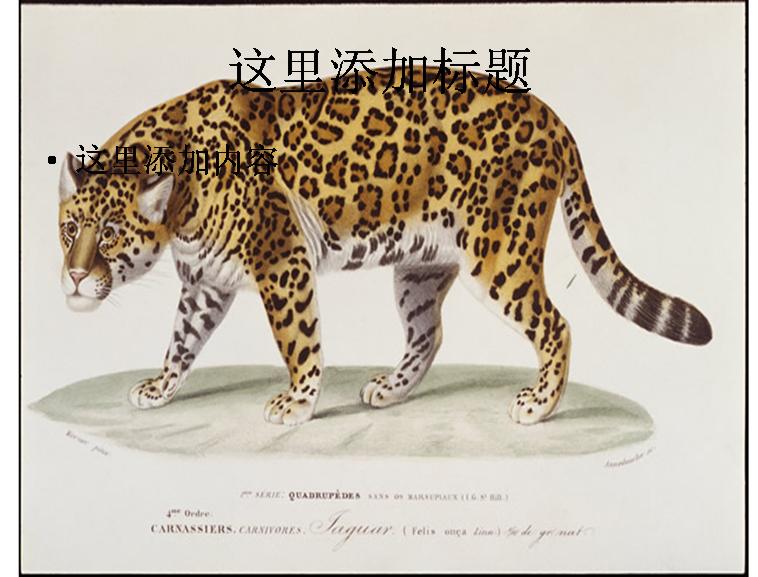 手绘豹图片