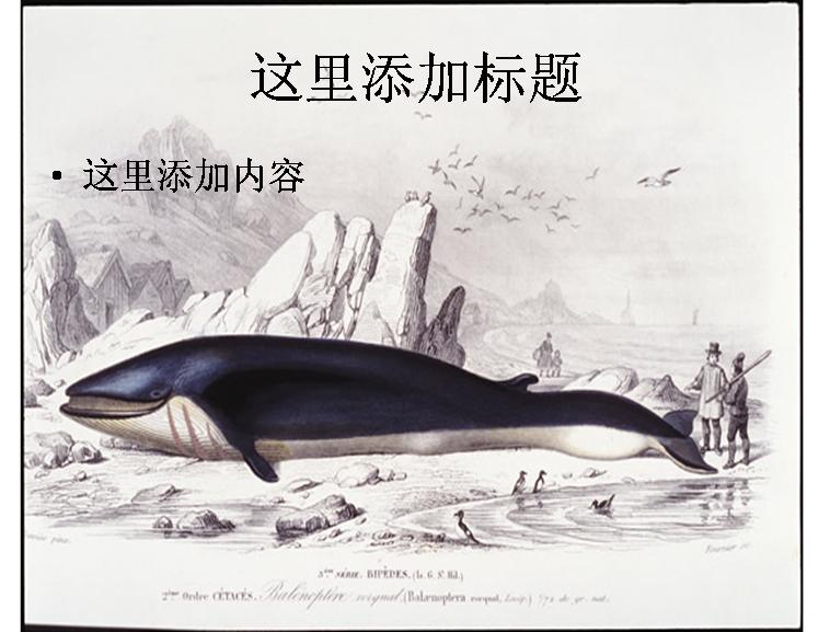 手绘鲸鱼图片