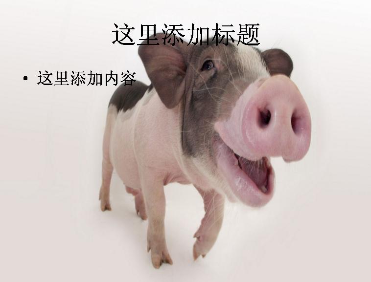 ppt背景可爱的非猪流图片(2)模板免费下载