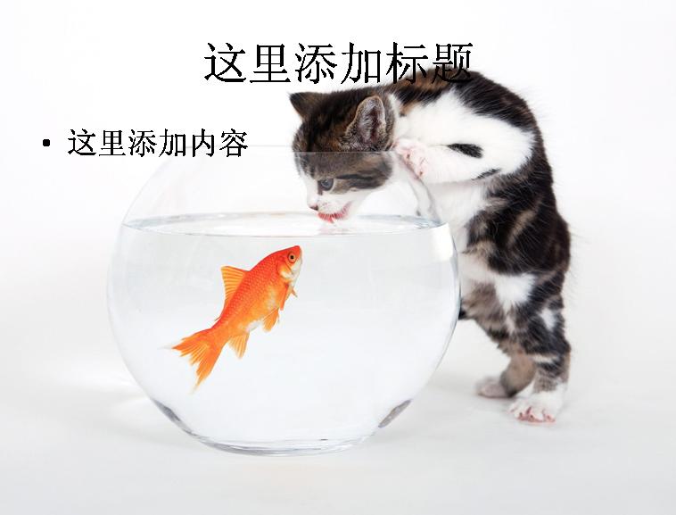 可爱小猫咪卖萌精选高清(2)模板免费下载