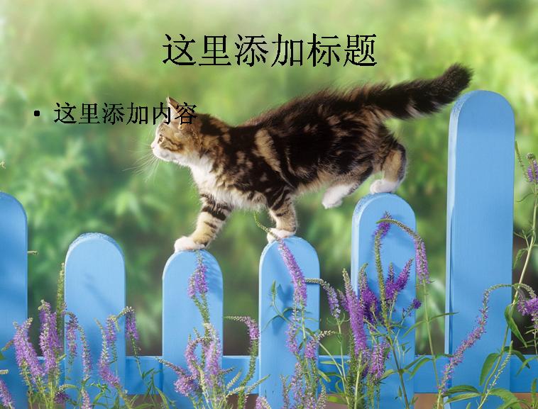 可爱小猫咪卖萌精选高清(4)模板免费下载