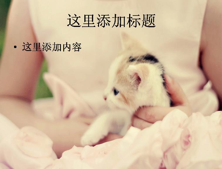可爱小猫咪卖萌精选高清(7)模板免费下载