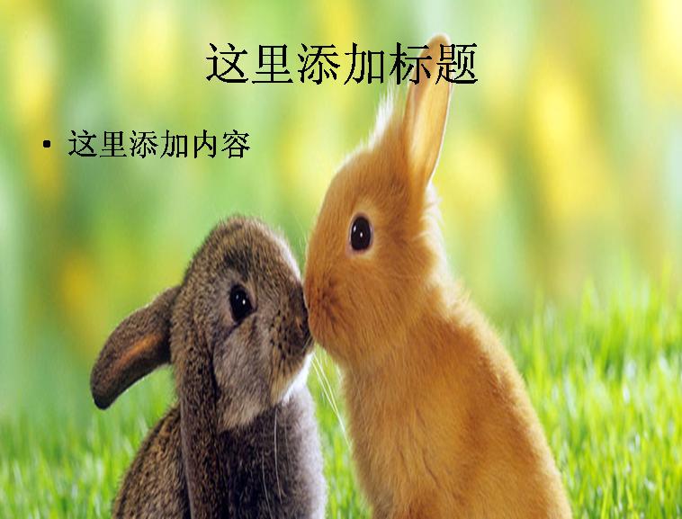 动物接吻动态图片大全