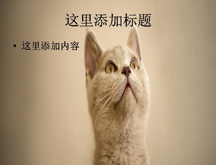 英文动物海报图片