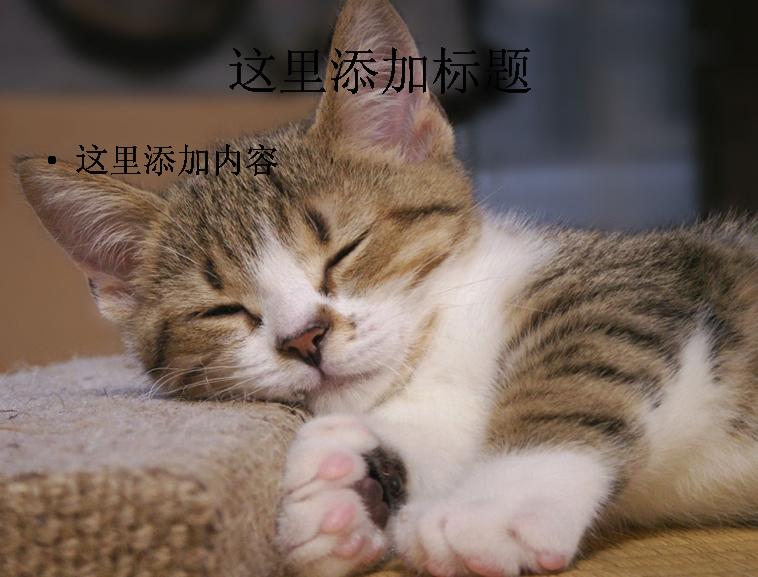 可爱猫咪(5)模板免费下载_86601- wps在线模板