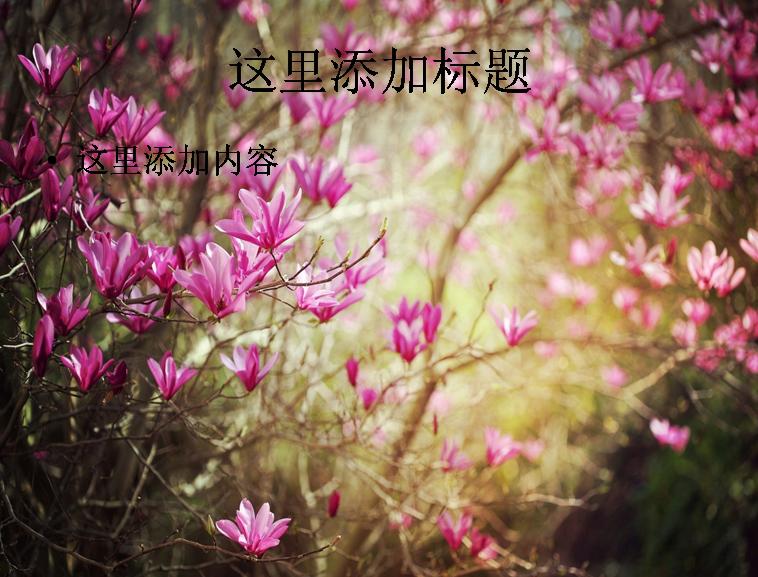 清新典雅玉兰花高清ppt(7)