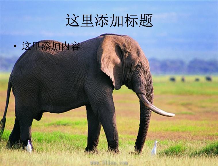 动物大象图片模板免费下载
