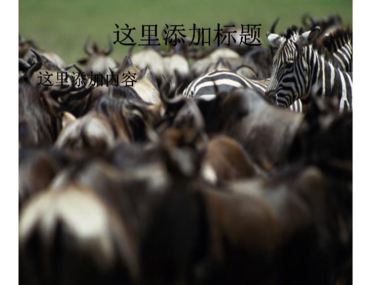动物素材图片模板免费下载