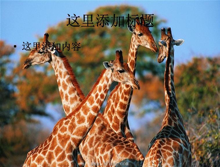 与[动物长颈鹿图片]同类模版