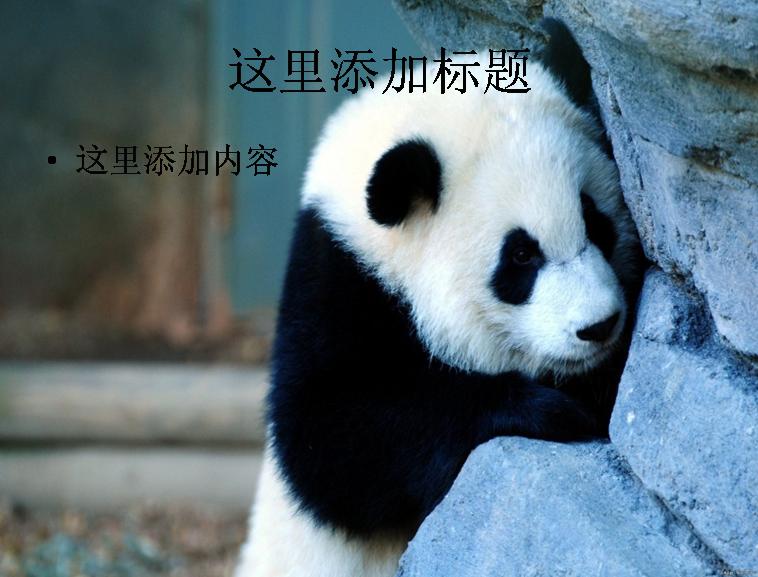 卖萌熊猫ppt(1_9)模板免费下载