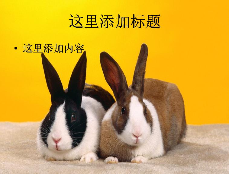 可爱小兔子ppt(1_30)模板免费下载
