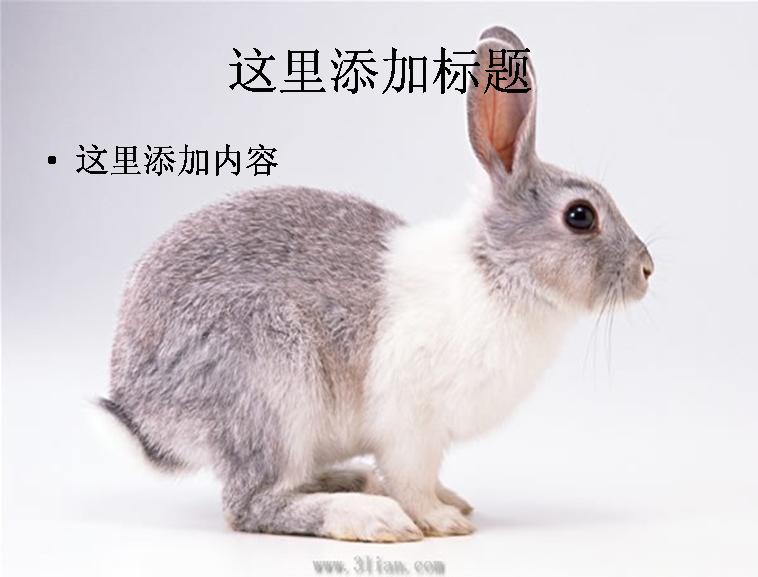 可爱小兔子图片模板免费下载