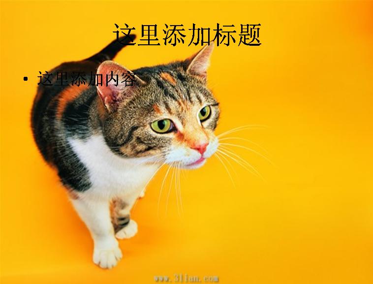可爱小花猫图片 支持格式:ppt