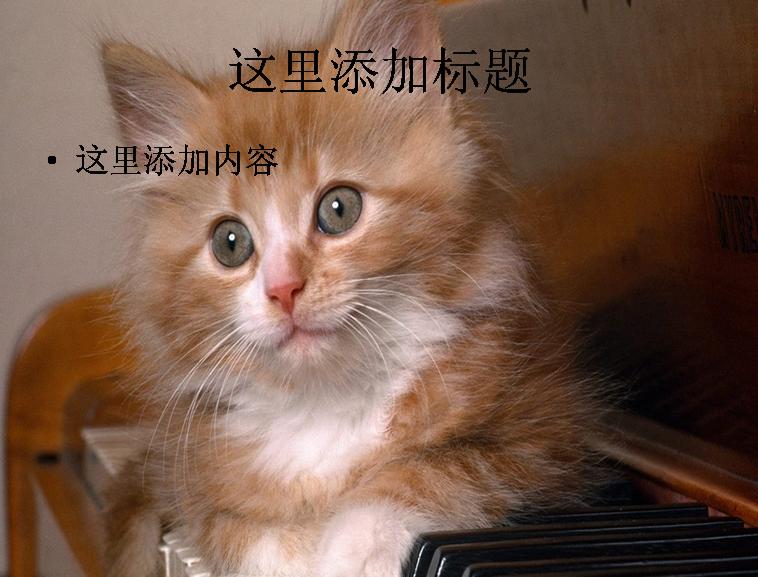 可爱小黄猫ppt(5_11)模板免费下载