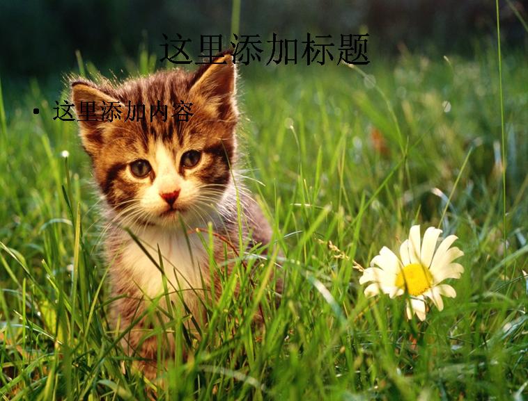 在线模板 可爱猫咪ppt(11_17)   1/