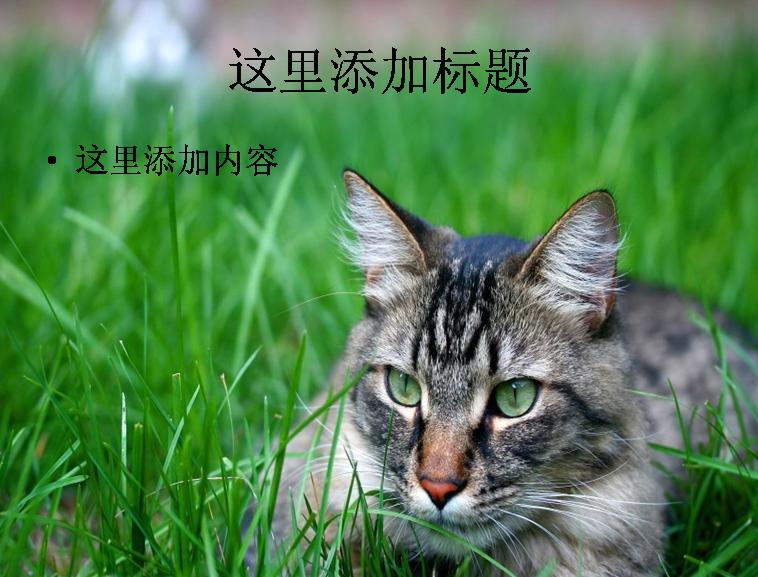 可爱猫咪ppt(15_17)