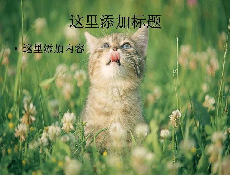 可爱猫咪ppt(4_17)