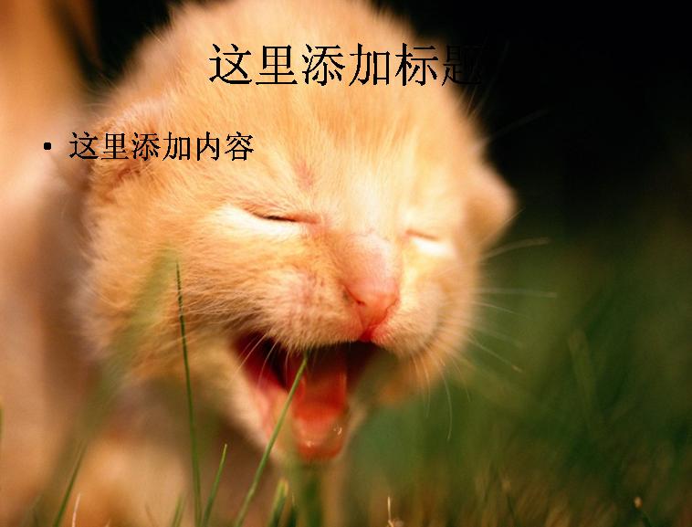 可爱猫咪ppt(8_17)