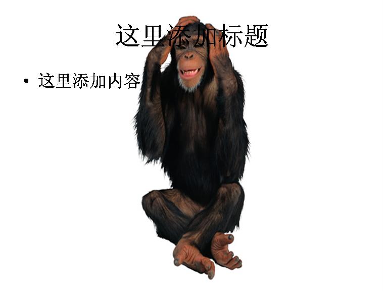 可爱猴子图片