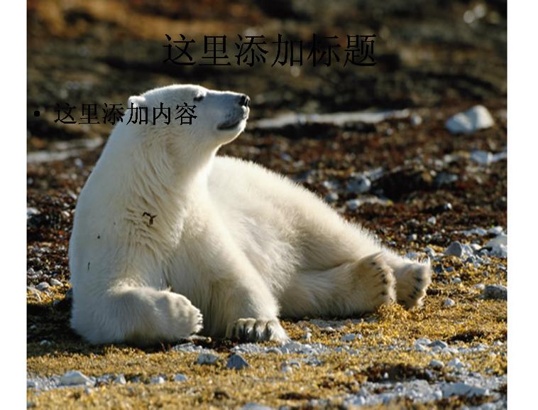 可爱的北极熊图片模板免费下载
