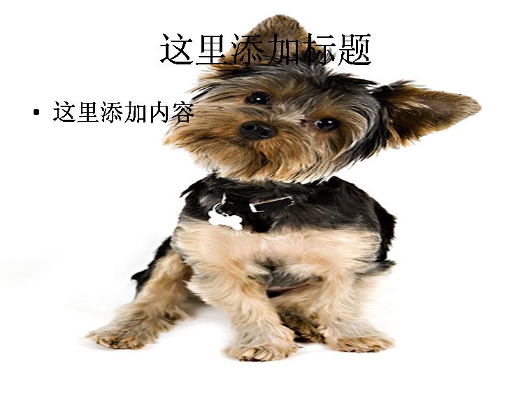 可爱的小狗ppt图片ppt素材-2动物素材
