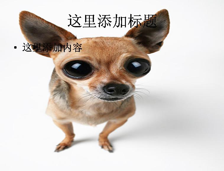 可爱的小狗ppt图片ppt素材-4动物素材模板免费下载