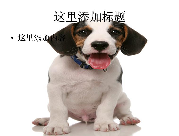 可爱的小狗ppt图片ppt素材-6动物素材