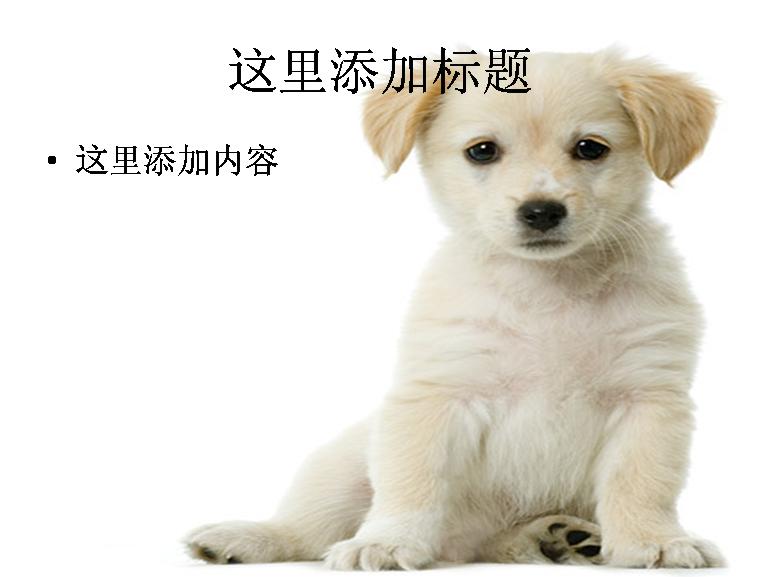 可爱的小狗ppt图片ppt素材-7动物素材模板免费下载