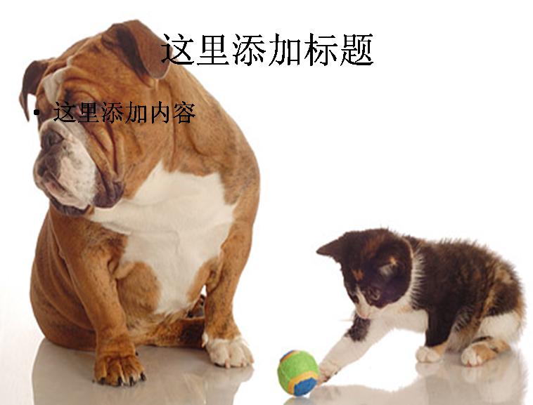 可爱的猫和狗图片ppt素材-8动物素材