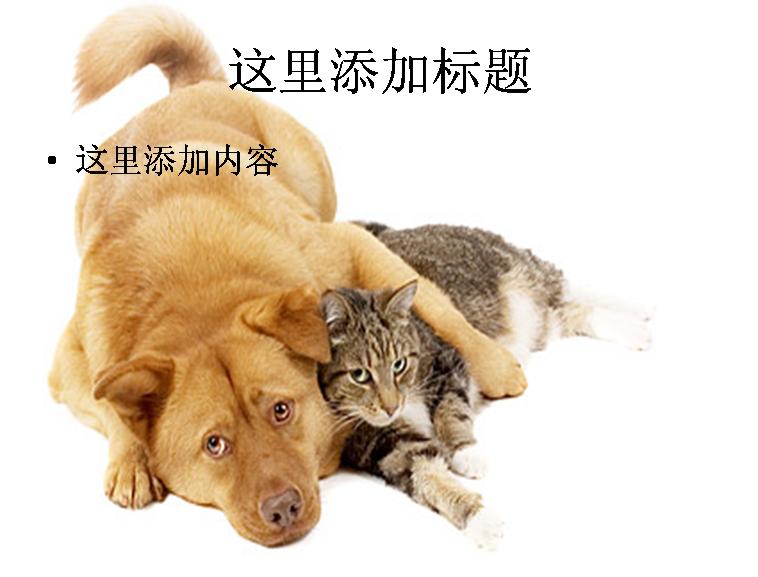 可爱的猫和狗图片ppt素材动物素材