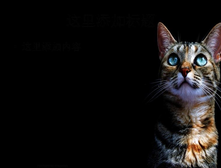 可爱的猫咪ppt(7_10)模板免费下载