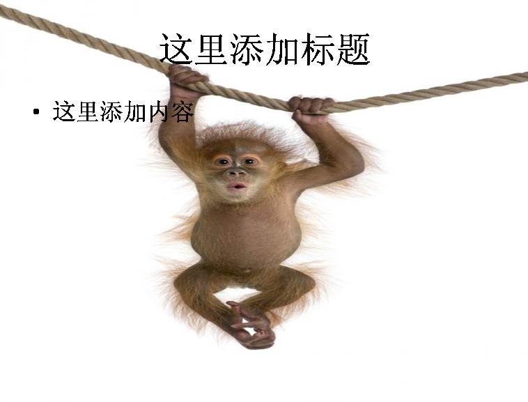 可爱的猴子高清图片ppt动物素材
