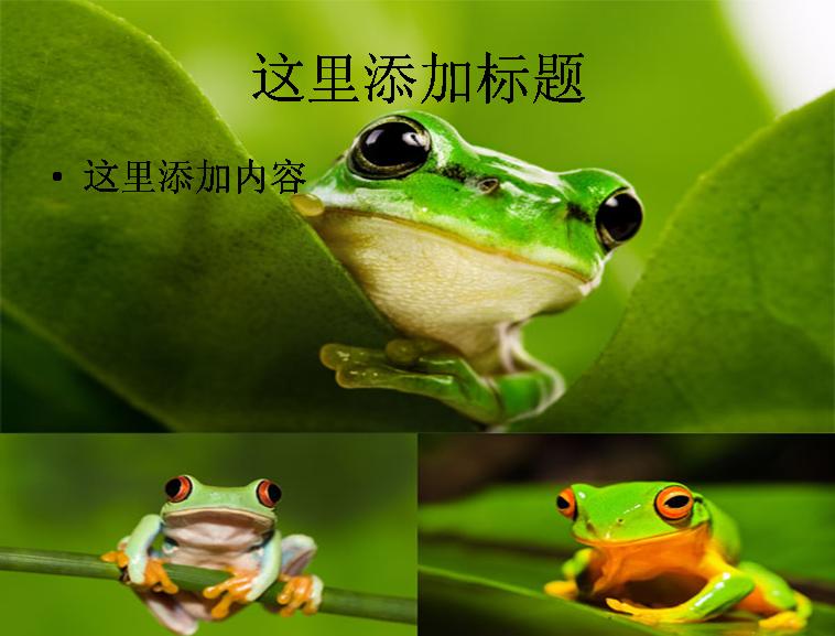 可爱的青蛙高清图片
