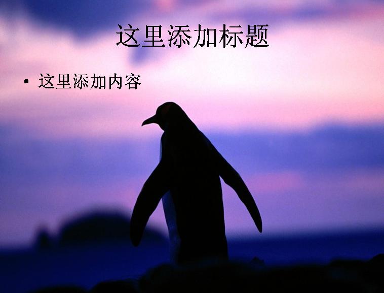 呆萌企鹅ppt(19_26)模板免费下载