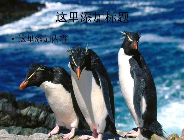 呆萌企鹅ppt(5_26)模板免费下载