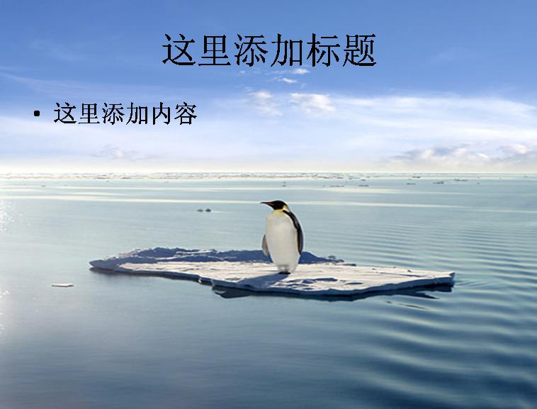 孤独的企鹅图片动物模板免费下载