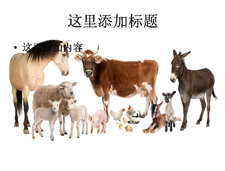 家禽家畜高清图片模板免费下载