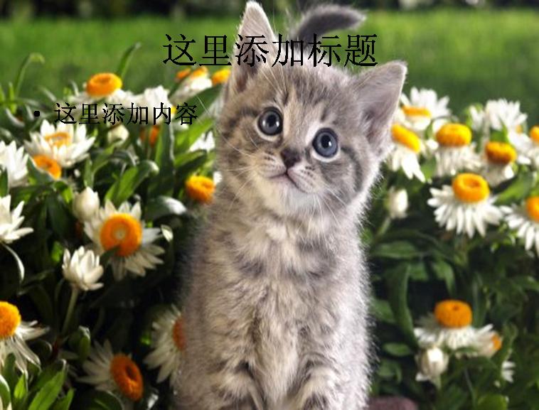 宽屏猫咪ppt-9-13动物素材模板免费下载